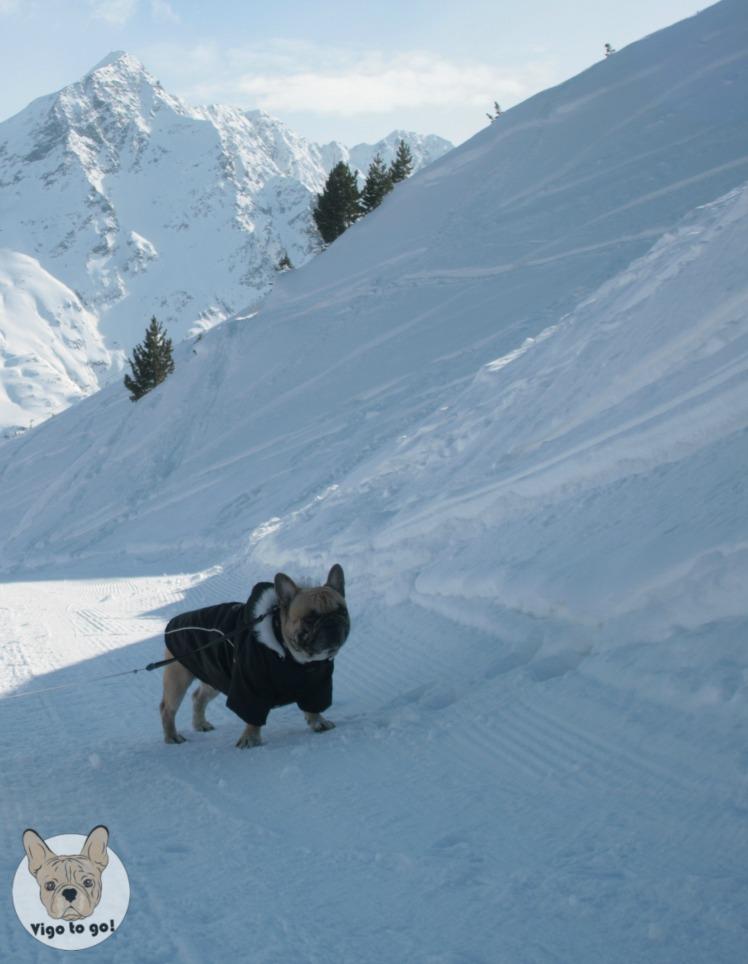 Z psem w Alpy - vigotogo.com